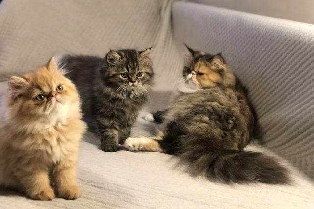 CAT- HAUSE